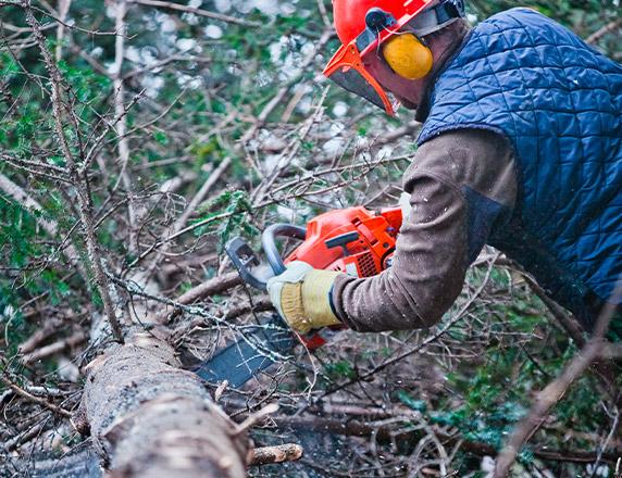 abattage arbre liège