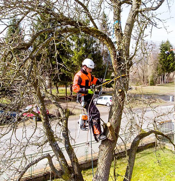 élagage arbre liège